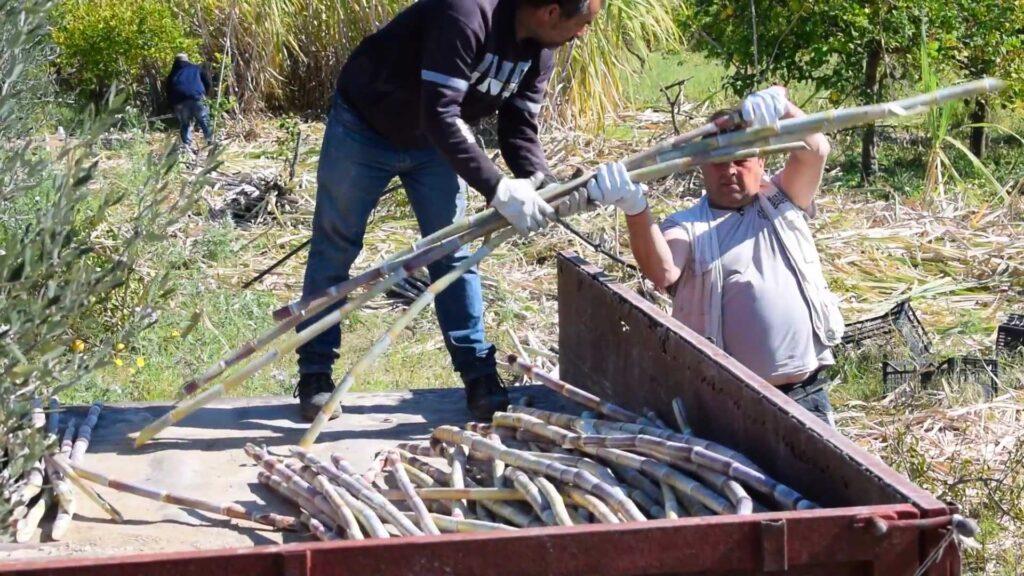 raccolta avola rum leviedelrum